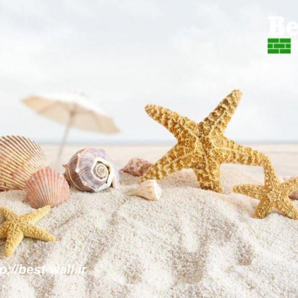کاغذ دیواری سه بعدی صدف دریایی