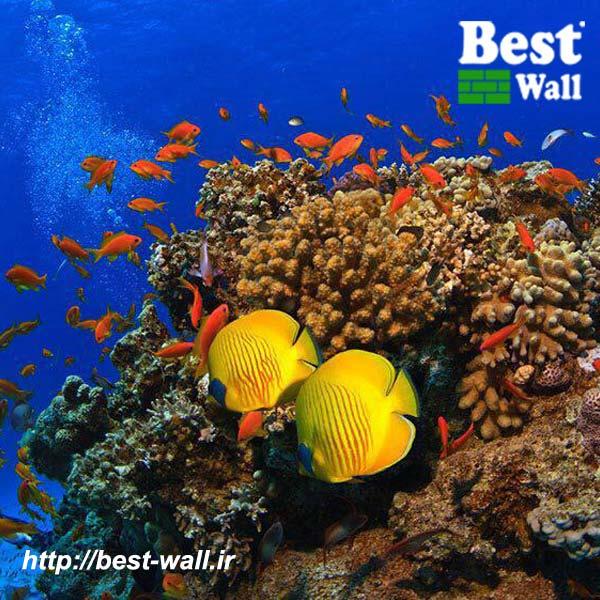 کاغذ دیواری طرح زیر آب