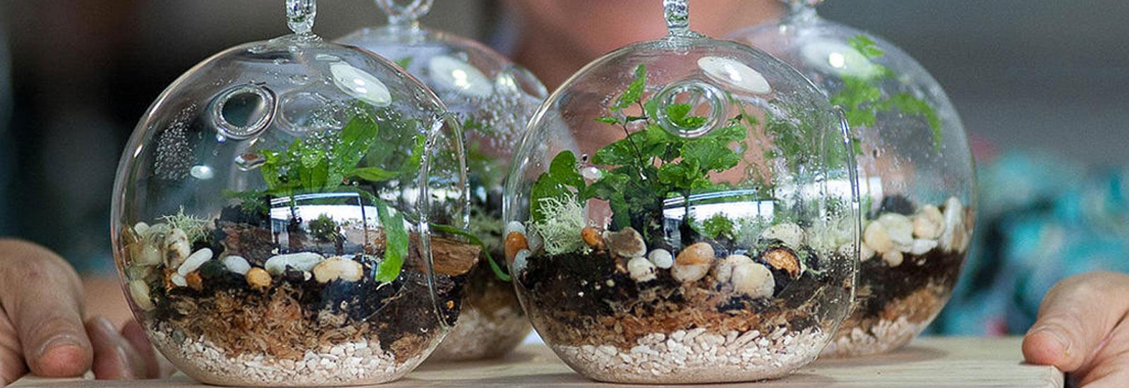 تراریوم، باغ شیشه ای یا گلخانه مینیاتوری