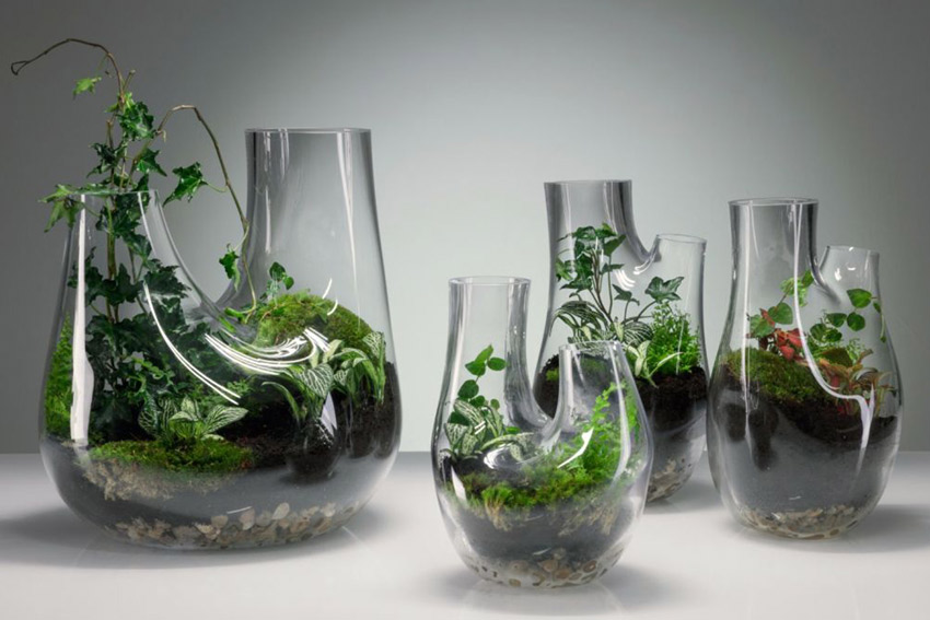 تراریوم باغ شیشه ای